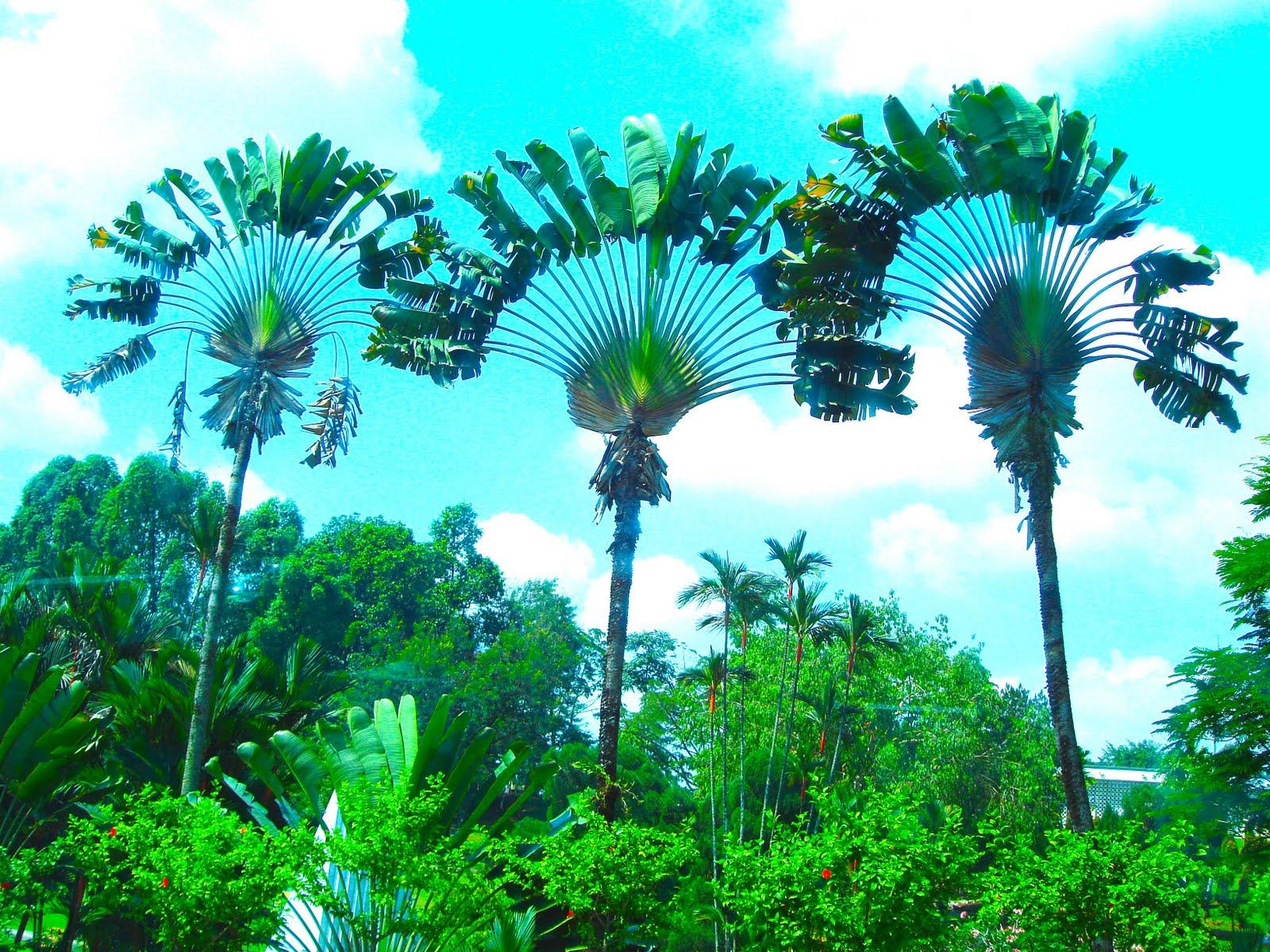 http://2.bp.blogspot.com/-rmH--Ve4qI0/TfLRwHV5kkI/AAAAAAAADDY/KL8ZOPUEWL4/s1600/palm-trees-1.jpg