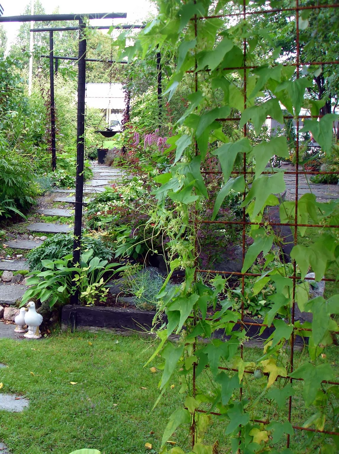 Tankar om och från min trädgård.: mitt i sommaren.
