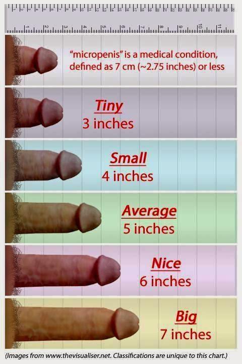Penis size correlations
