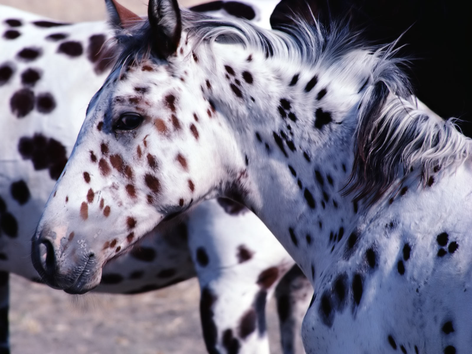 Must see   Wallpaper Horse Wolf - horse-wallpapers  Pic_804316.jpeg