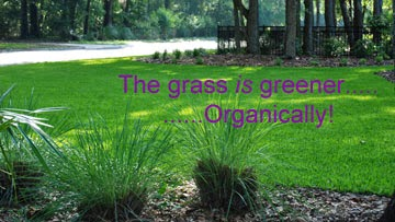Organic Turf Grass Management