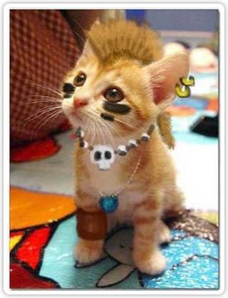 Escogencia del Logo Gato_punk-imagenes-curiosas-graciosas-comicas-humor-grafico-fotos-chistosas