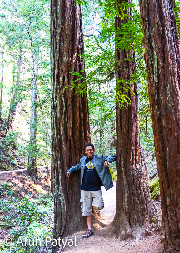 It's fun to walk around these woods and appreciate the hues, shapes, shades & so on... Redwood National and State Park has served as a filming location for numerous films. Scenes set on the forest moon Endor in Star Wars Episode VI: Return of the Jedi  were filmed in the Tall Trees Redwood Grove in the northern part of Humboldt County, though the majority of filming was in private and public forests near the town of Smith River, California. Scenes for The Lost World: Jurassic Park as well as the movie Outbreak were filmed at the nearby Prairie Creek Redwoods State Park  and at Patrick's Point State Park.
