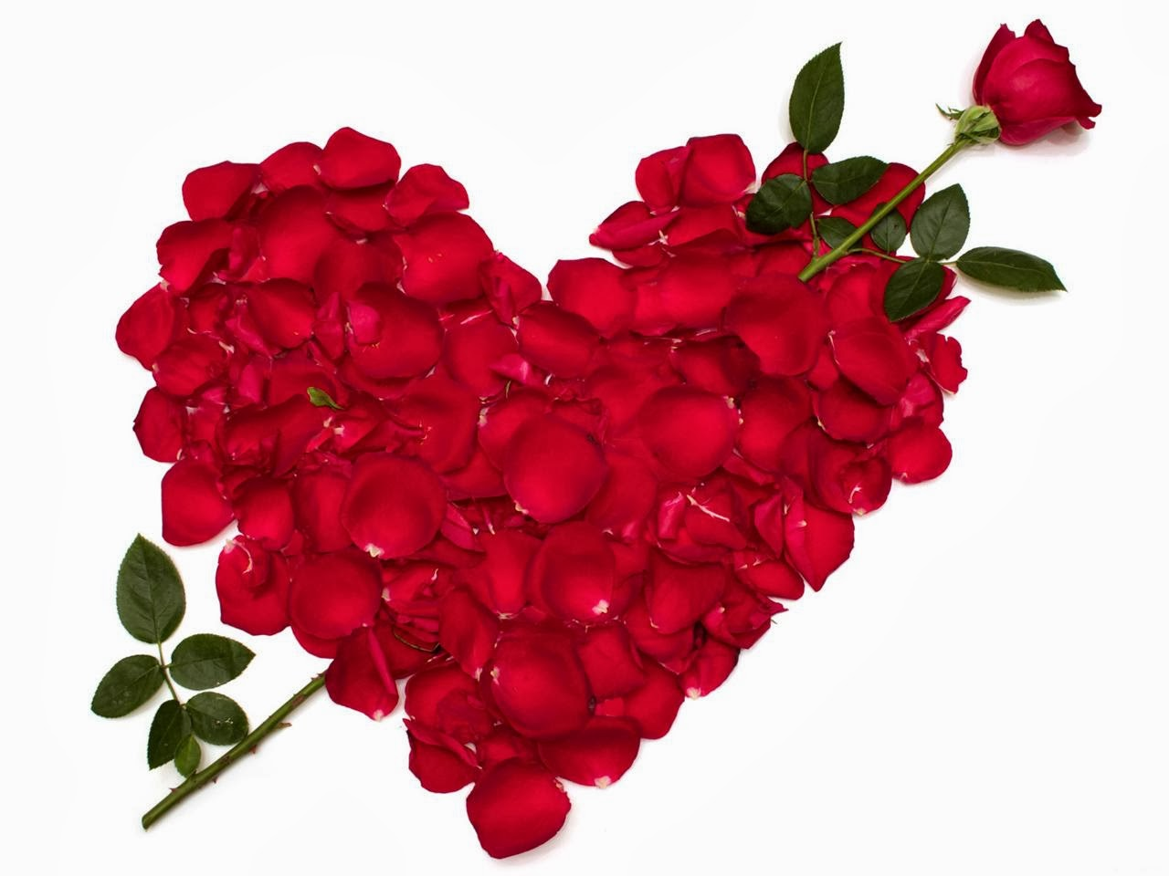 Gambar Bunga Mawar Love