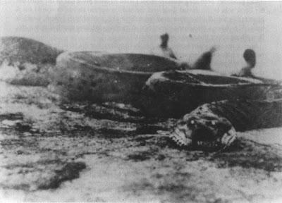 Ular Raksasa Anaconda