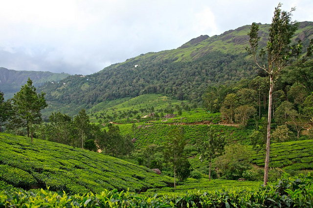best location Munnar, Location of Munnar, Tourist attraction Munnar, travel Kerala, view Munnar