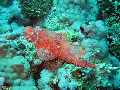 Elphistone Reef 187