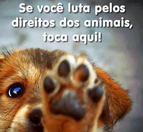 B.O.ANIMAL
