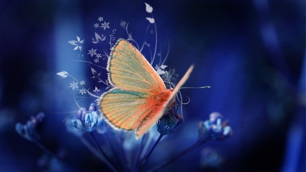 Butterfly Wallpapers HD Download
