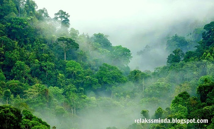 Jenis-Jenis Hutan Di Malaysia - Hutan Darat