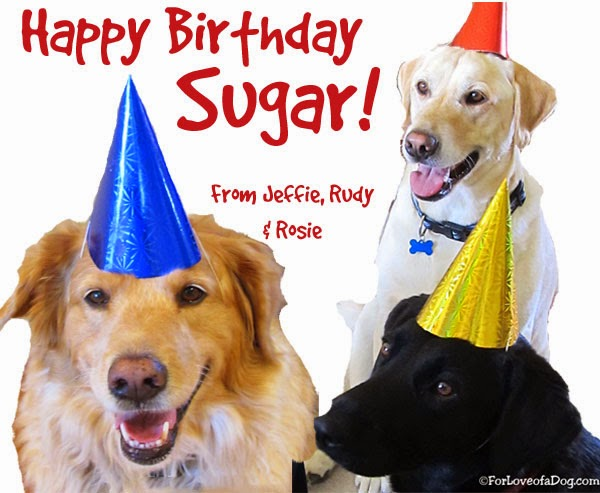 Talking Dogs At For Love Of A Dog Happy Birthday Sugar