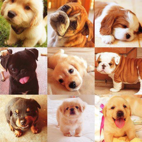 Smiling and sleeping faces of dogs image