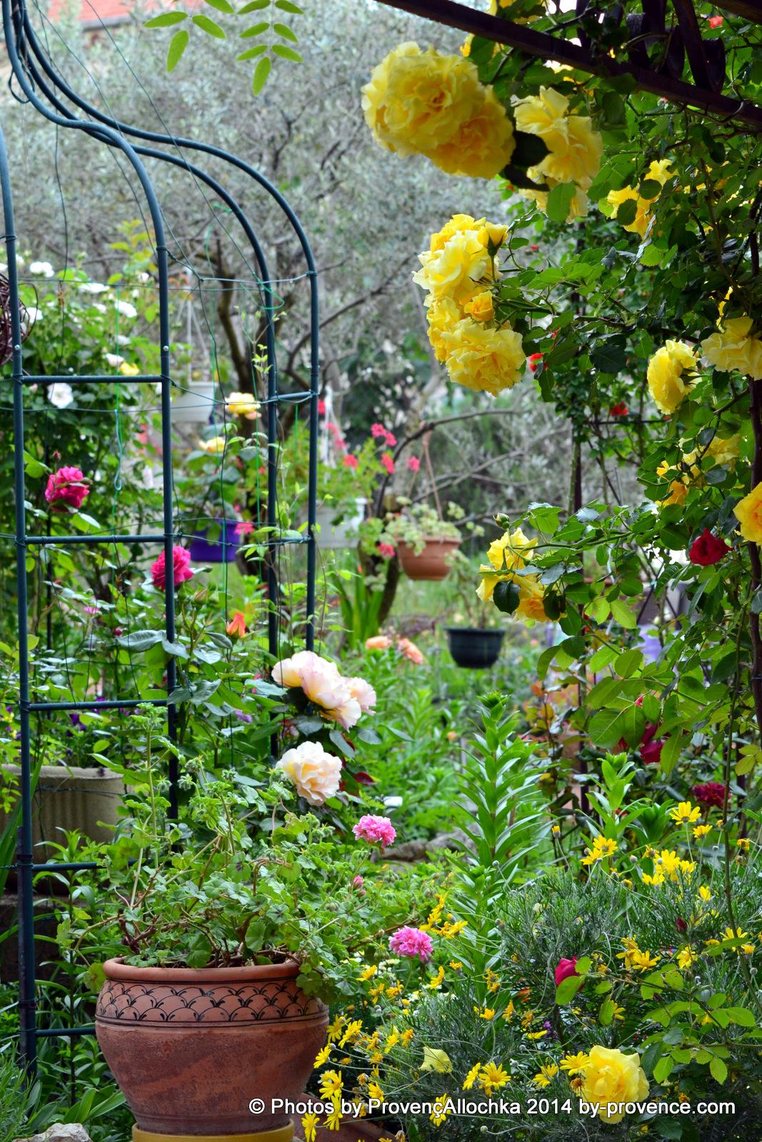 rose jaune et jardin des fleurs