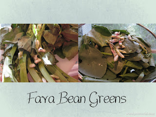 Fava Bean Greens