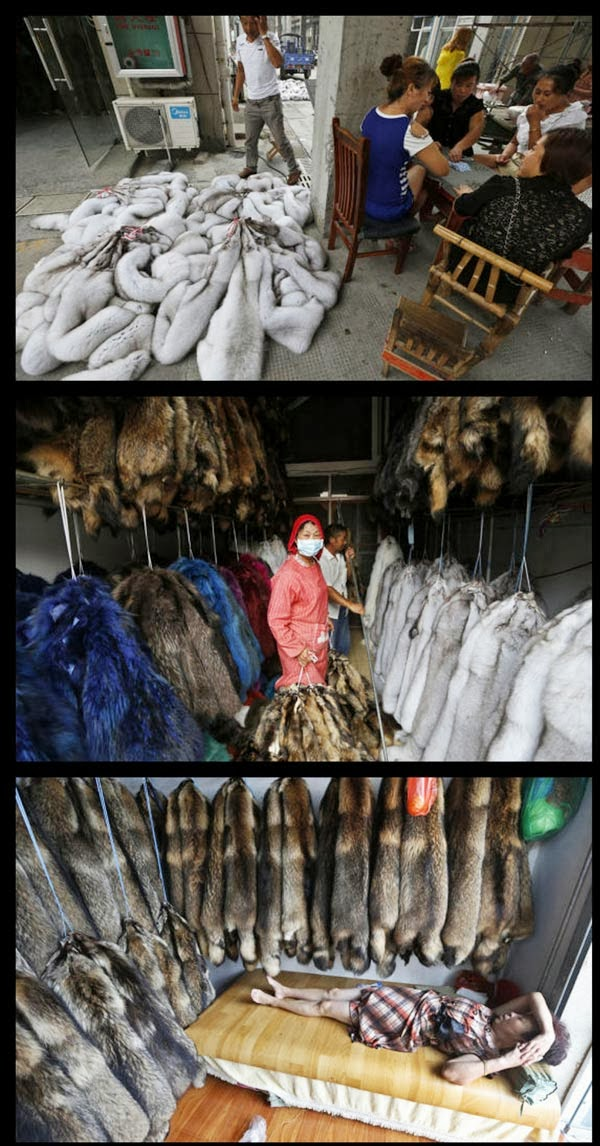 The Largest Area of Animal Fur Processing in China (10 photo)