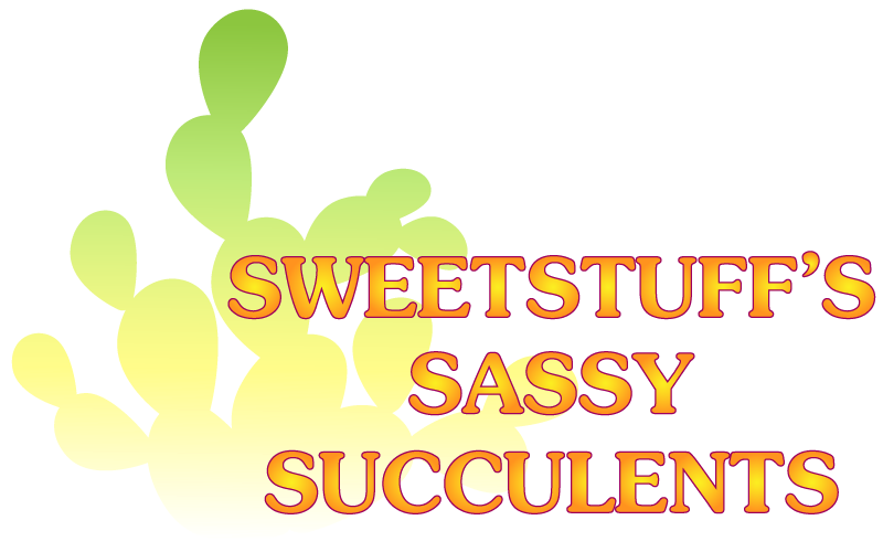 Sweetstuff&#39;s Sassy Succulents