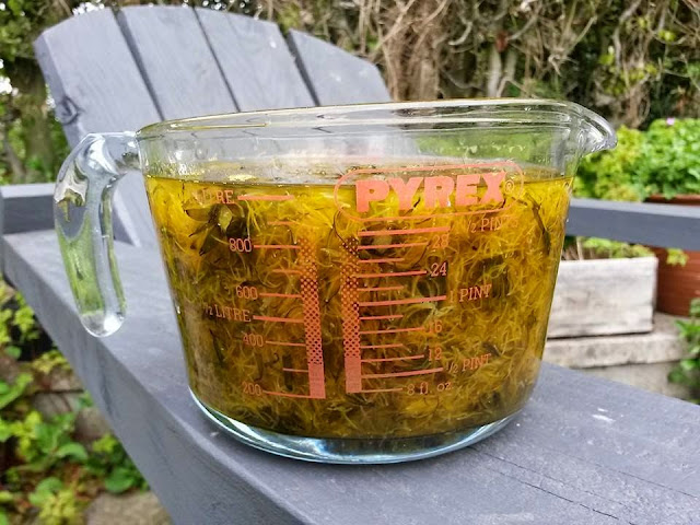 Foraged Wild Food - Dandelion Jam / Honey