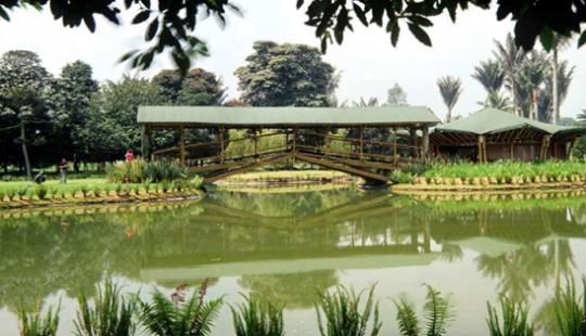 Orquideas jardin botanico bogota for Jardin botanico bogota nocturno 2016