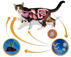 Quais as análises na identificação de parasitas são
