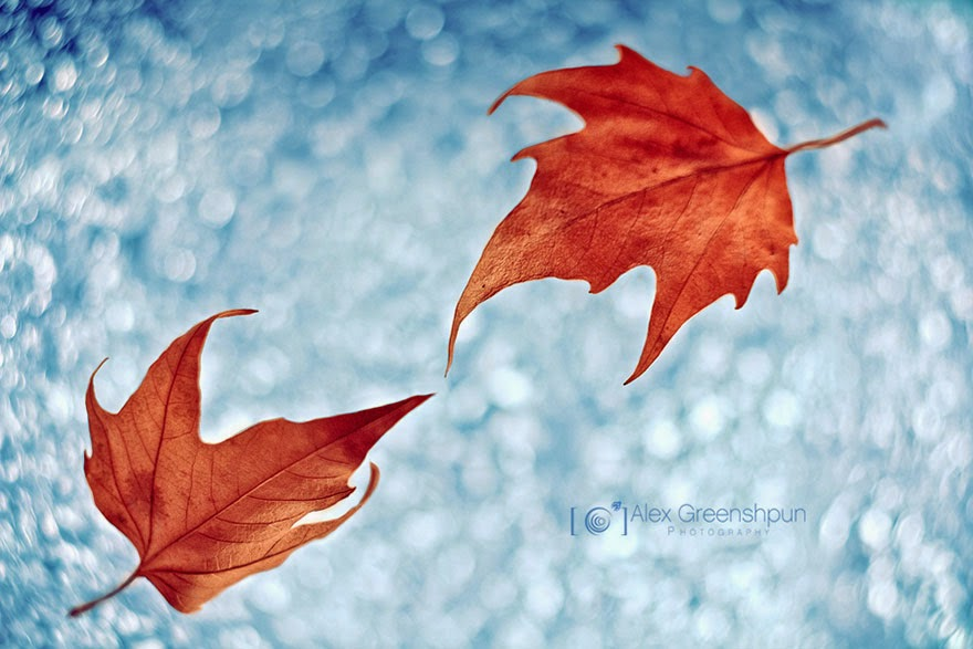 Autumn artistic photography