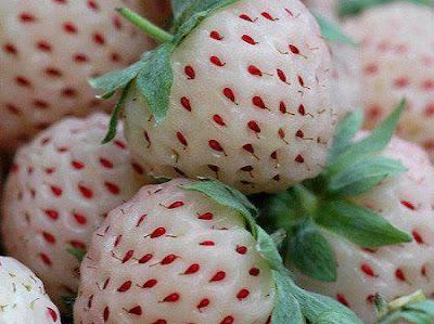 Inilah 7 buah-buahan dengan rasa paling menipu