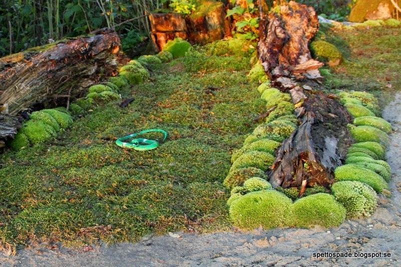 japansk mossträdgård i Umeå
