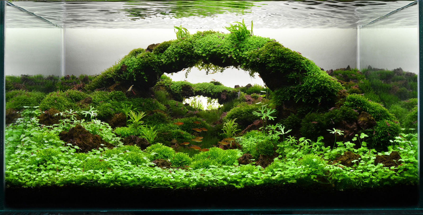 Aquascape gallery my life my story - Gallery aquascape ...