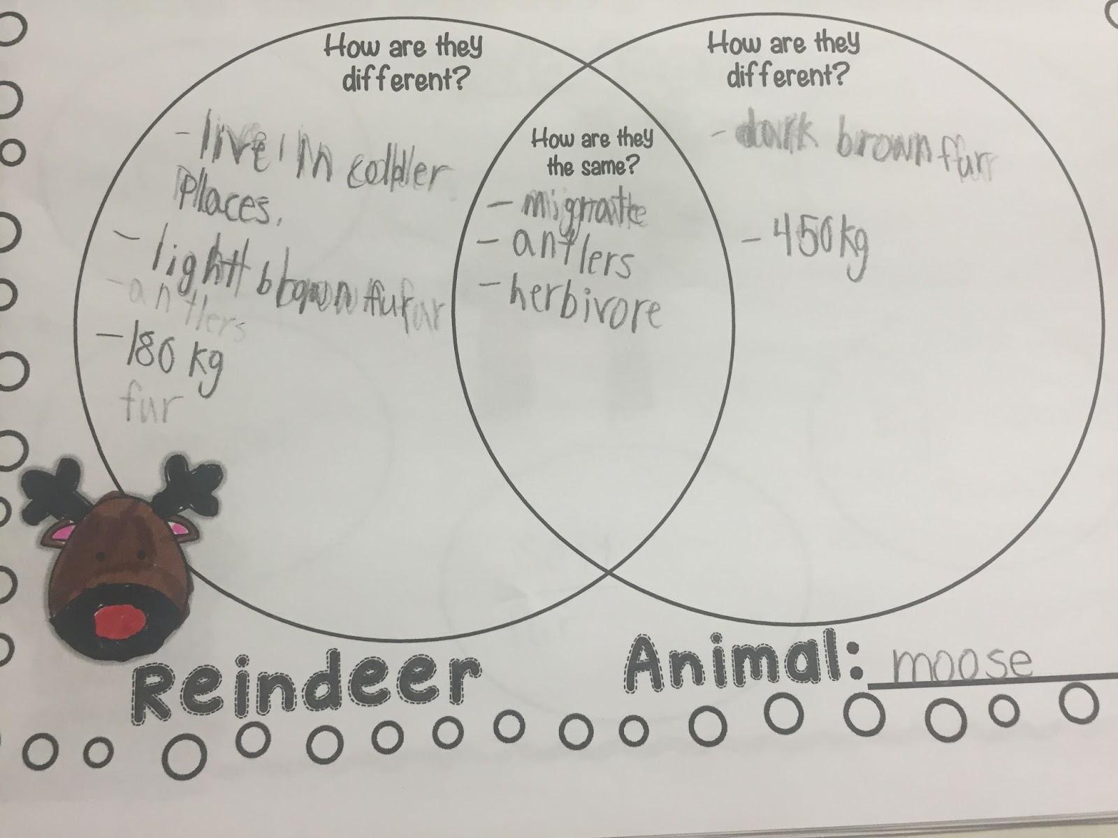 IMG_5264 miss vanchu's classroom blog reindeer