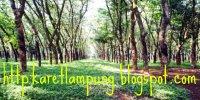 Karet Lampung Murah Siap Kirim 500 Ton Per Hari
