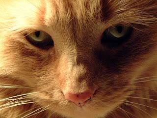 Aries The Cat
