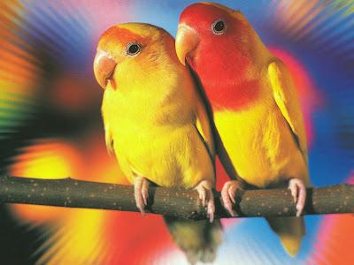 http://2.bp.blogspot.com/-rs7jzYq_tsg/T7Hp6JArv7I/AAAAAAAAALc/MBsLhFZPBIU/s1600/lovebirds.jpg