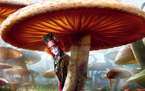 Bajo los hongos