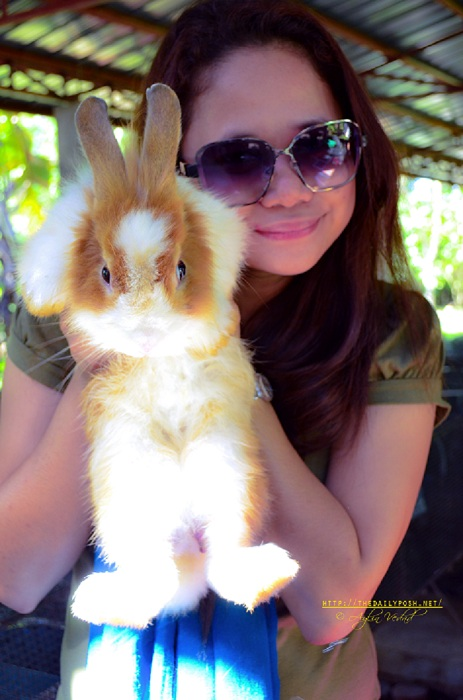 Where Am I | The Robby Rabbit Farm
