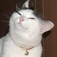 troll cat