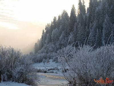 Muresul Iarna