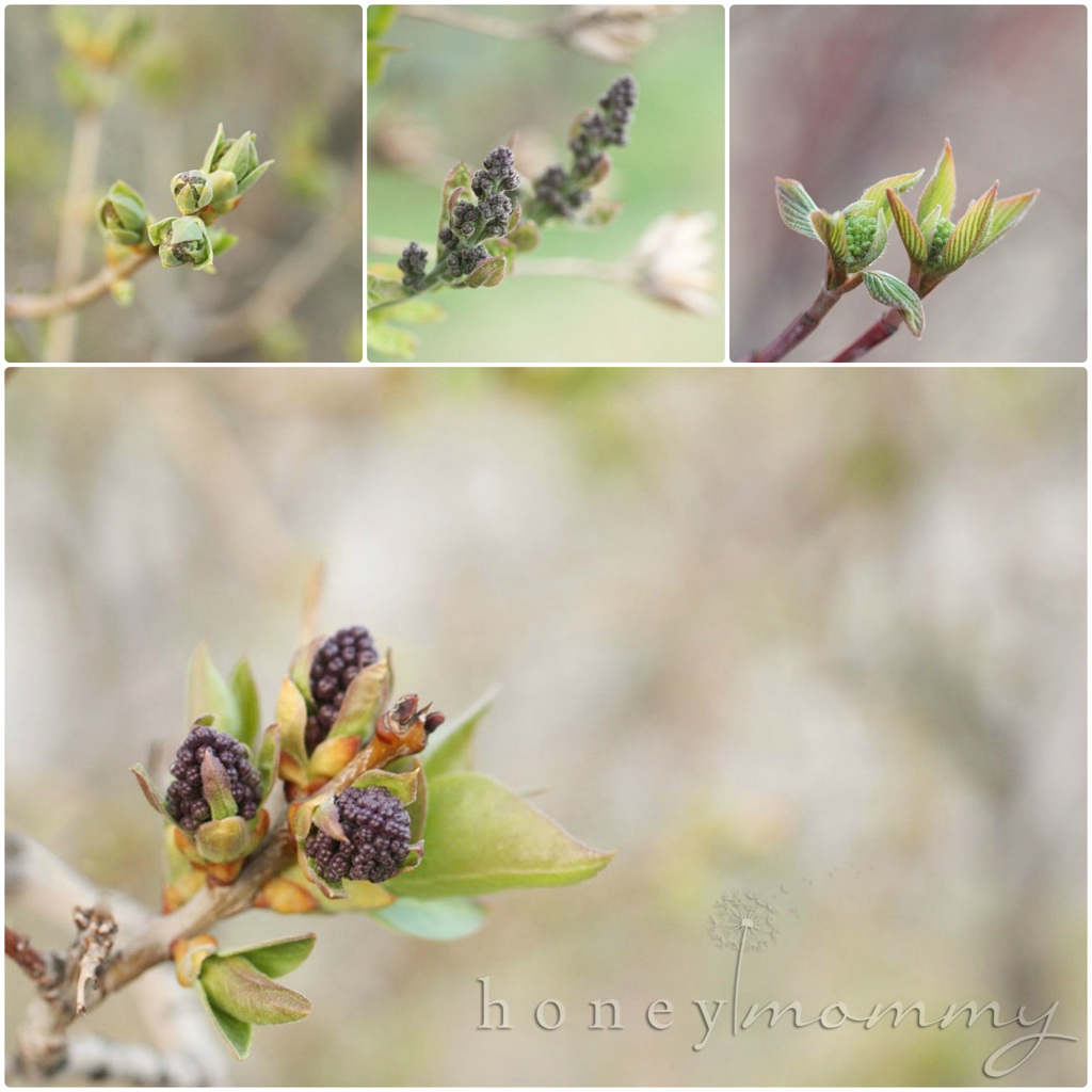 ... budding. Nature is slowly but surely turning green and growing. I LOVE