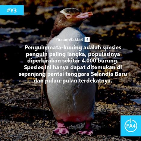 Pinguin Mata-Kuning Spesies Pinguin Langka