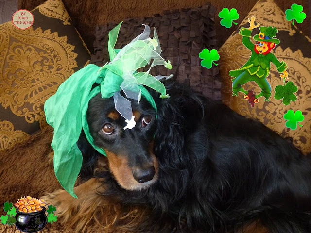 Molly The Wally St Patricks' Day!