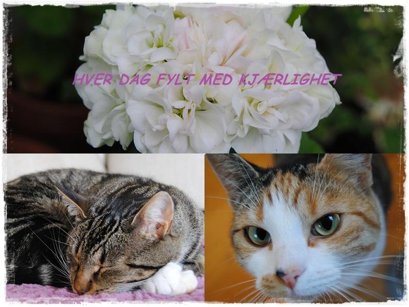 Hver Dag Fylt Med Kjærlighet