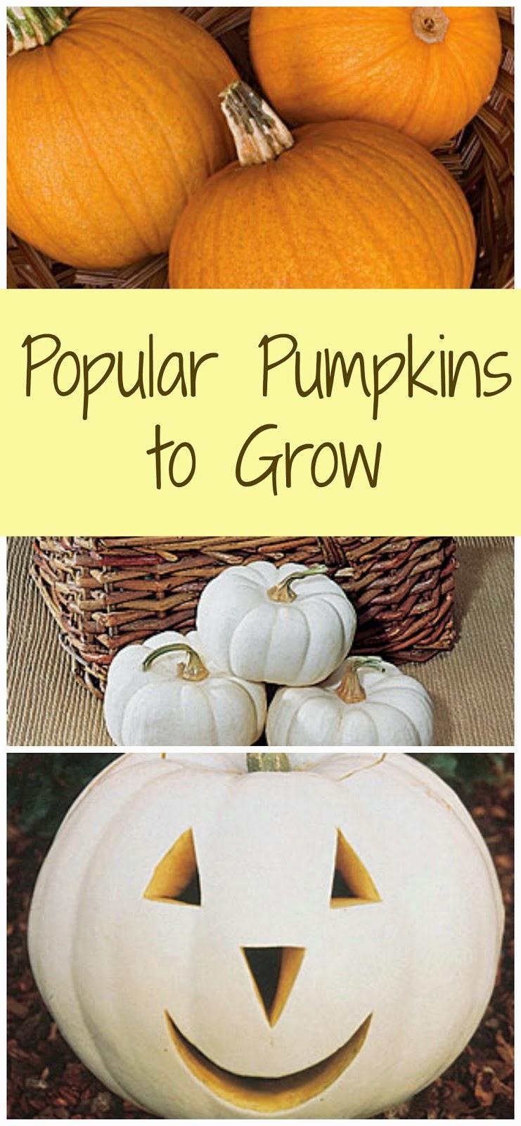 for Best pumpkins to grow