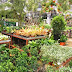 Fang Kiat Florist & Landscaping