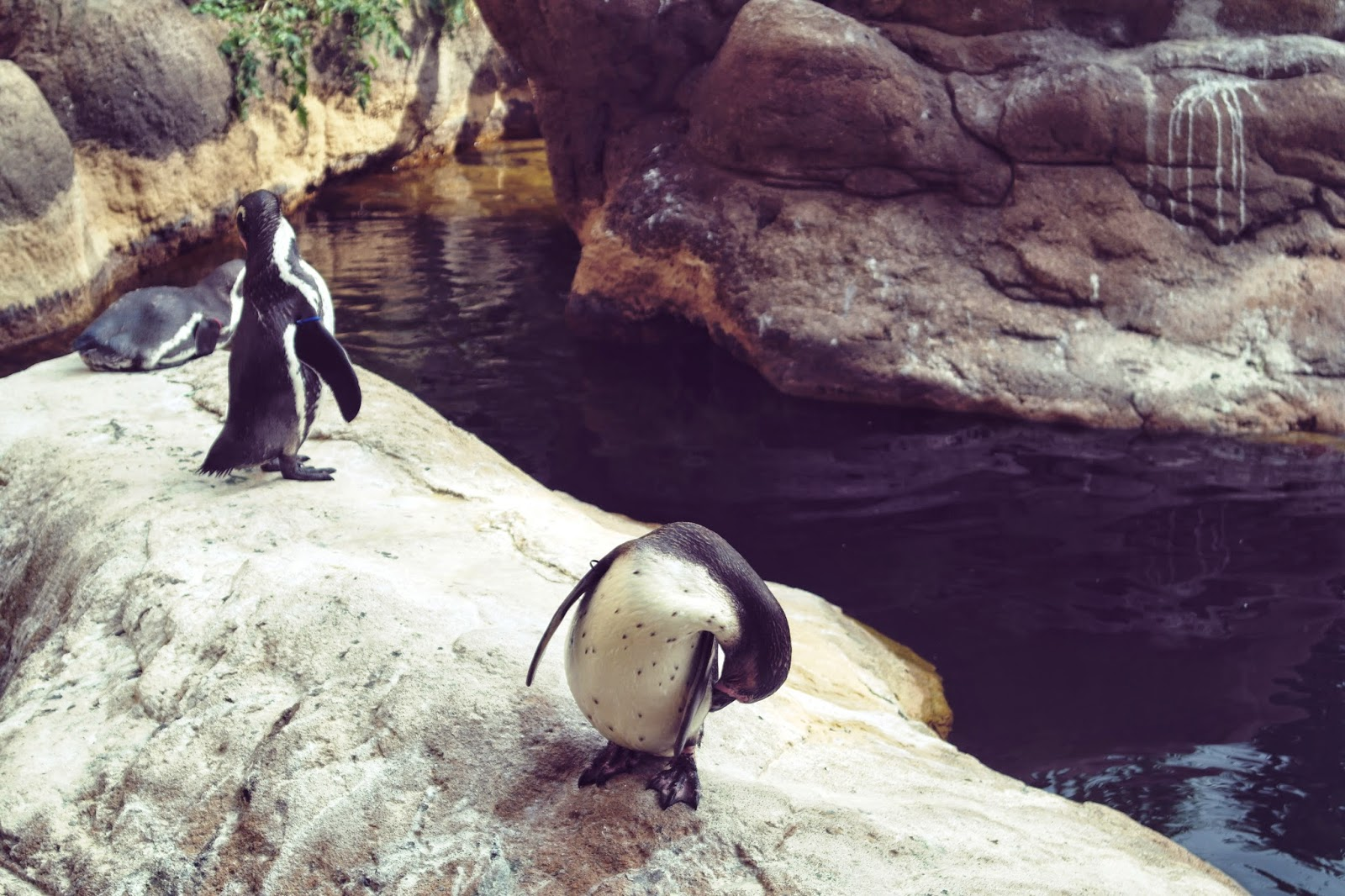 barcelona zoo penguin