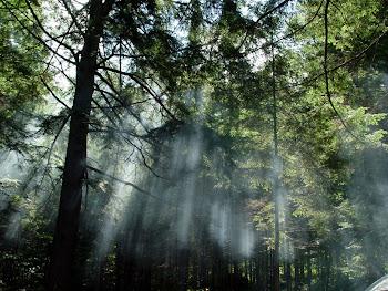 """""""De uma árvore nasce uma floresta. Plantar é ótimo, mas temos que preservar as que já existem"""". AJM"""