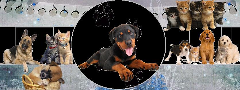Mundo Mascota