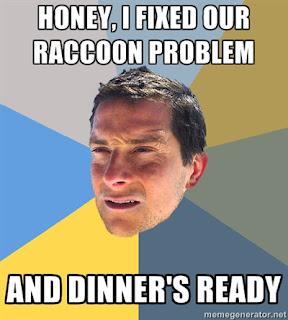 bear grylls racoon