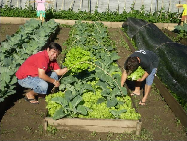 imagens de jardim horta e pomar:Figura 2. Horta orgânica do CAPS – Centro de Atenção Psicossocial