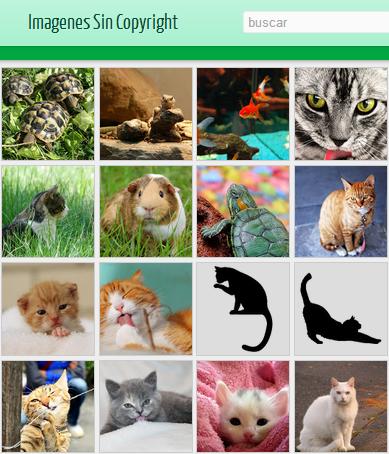 colage de imágenes sin copyright de gatos y otras mascotas