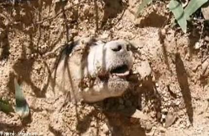 anjing, kena tembak, di kepala, masih hidup, pelik, kisah, binatang, haiwan, selamat, petugas, terkejut, ikat, renungan, zalim