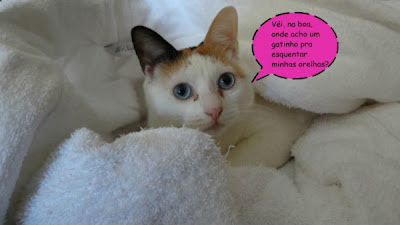 Cathy, a gatinha amiguinha do Gato Theo