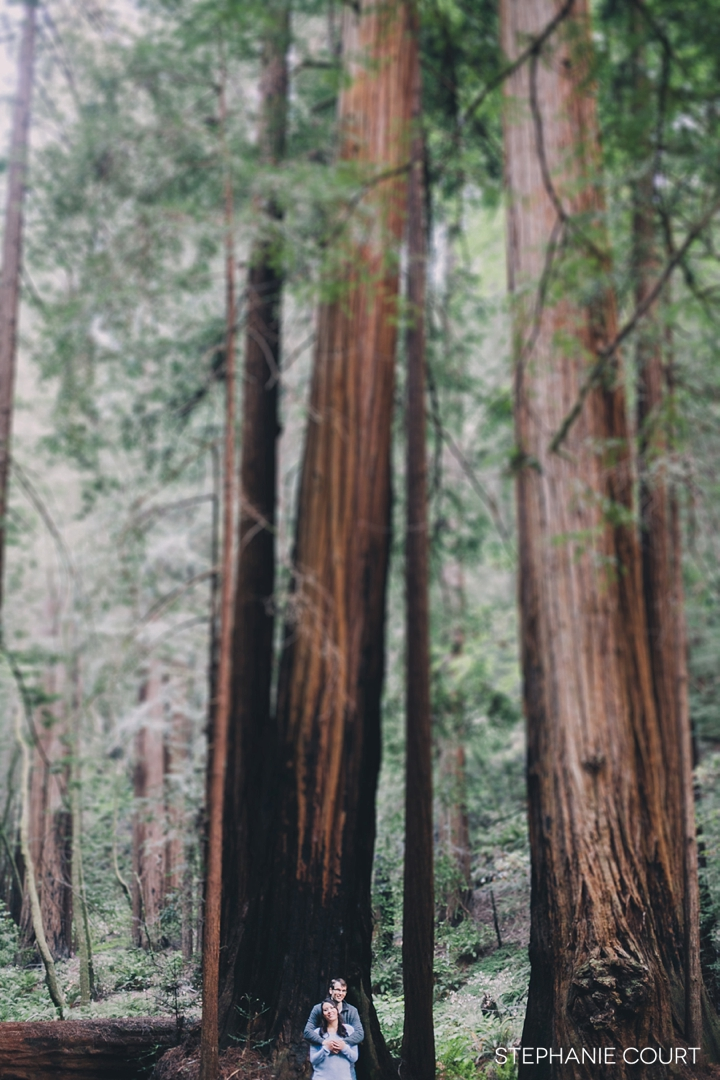 engagement photos in muir woods